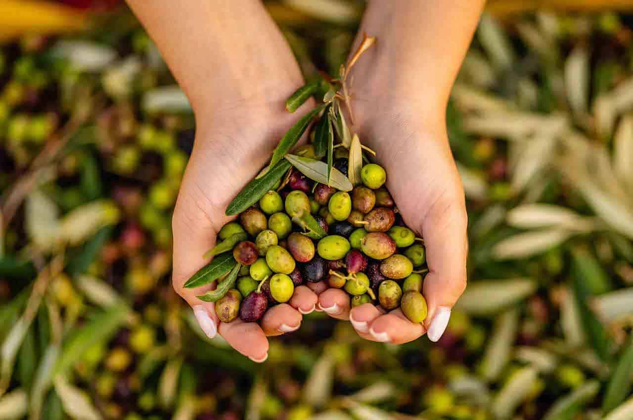 Il sapore dell'olio - Discover the real taste of olive oil