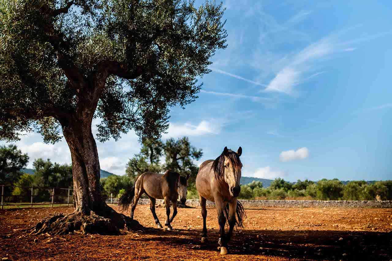 La Puglia a cavallo - Sunset horse ride in Puglia