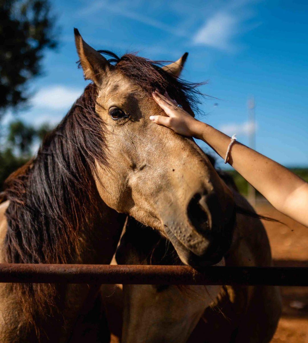 La Puglia a cavallo